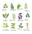 set of herbs isolated vector image vector image