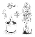 Sketch of blossoming hyacinth hand drawing with vector image