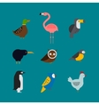 Birds set isolated vector image
