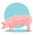 pink pig vector image