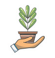 plant with leaves inside flowerpot design in the vector image