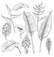 tropic flowers sketch vector image vector image
