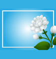 border template with white jasmine flowers vector image