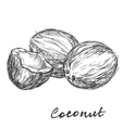 coconut set hand drawn sketch vector image