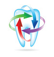 fluoride tooth protection vector image