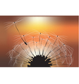 dandelion at sunset vector image