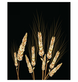 Wheat isolated on black vector image