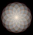 flower of life sacred geometry vector image