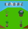 isometric plant set of fern flower houseplant vector image