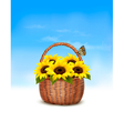 Spring background Basket full of sunflowers and a vector image