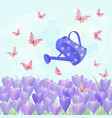 field of blooming crocus with a vintage can vector image