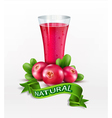 glass cup with juice of cranberries isolated vector image vector image