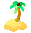 palm tree in vector image
