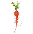 Watercolor of carrot vector image
