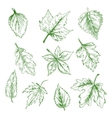Sketched isolated green tree leaves vector image vector image