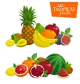 Exotic tropical fruits composition Cartoon vector image