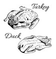 sketch of turkey and duck vector image