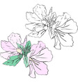 Beautiful flowers mallow stencil and color variant vector image vector image