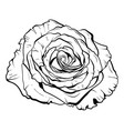 beautiful monochrome rose hand-drawn vector image vector image