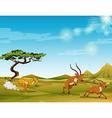 Cheetah chasing deers in the savanna vector image