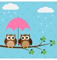 Owls couple under umbrella vector image