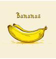 Yellow ripe bananas vector image