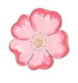 Dog rose flower vector image