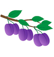 Branch of ripe plums vector image vector image