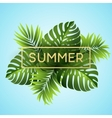 Tropical monstera leaves design for text card vector image vector image