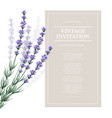 Vintage card with lavender flowers vector image