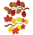 Elm and maple leaves vector image