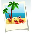 summer shot vector image