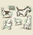 Vintage Dog Etchings vector image