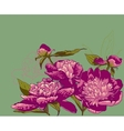Peony flowers llustration vector image