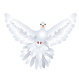White Pigeon vector image