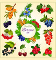 Wild berries and fruits set poster vector image