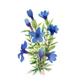 Blue watercolor wildflowers isolated on white vector image