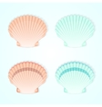 Set of four sea shells vector image
