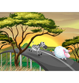 A zebra and a sheep running at the road vector image vector image
