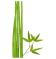Colorful Stems and Bamboo Leaves vector image