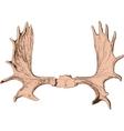 elk antlers vector image