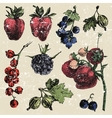 Hand dawn berries vector image