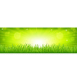 Grass With Green Background vector image