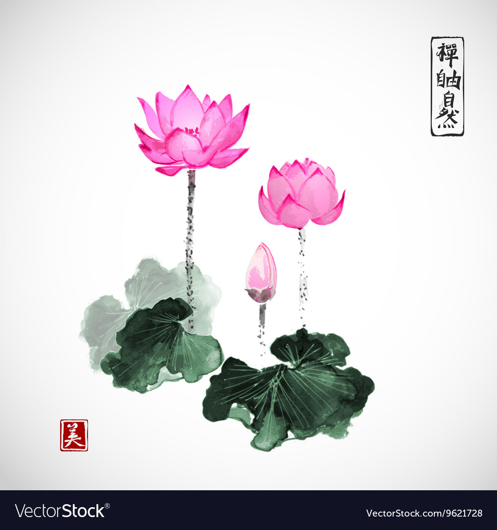 Pink lotus flowers hand drawn with ink vector