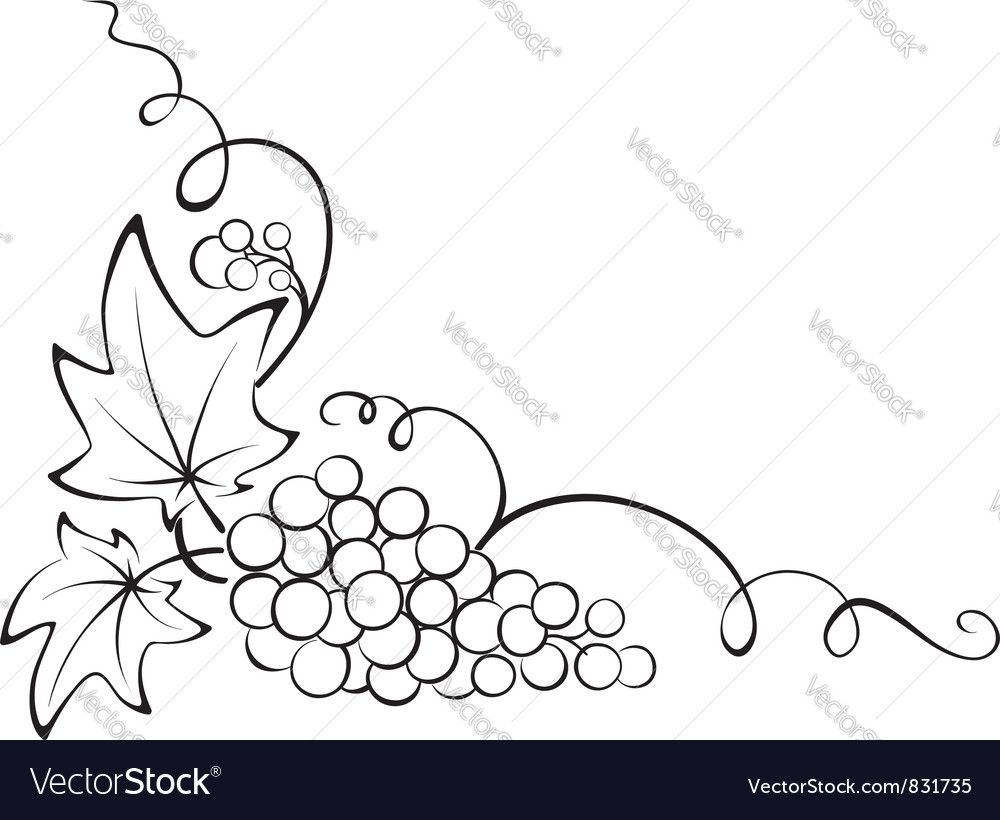 Design element  grapevine vector