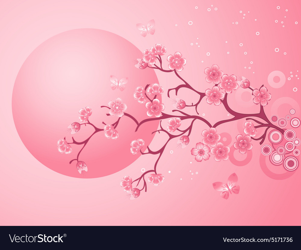 Pink cherry blossoms sakura vector