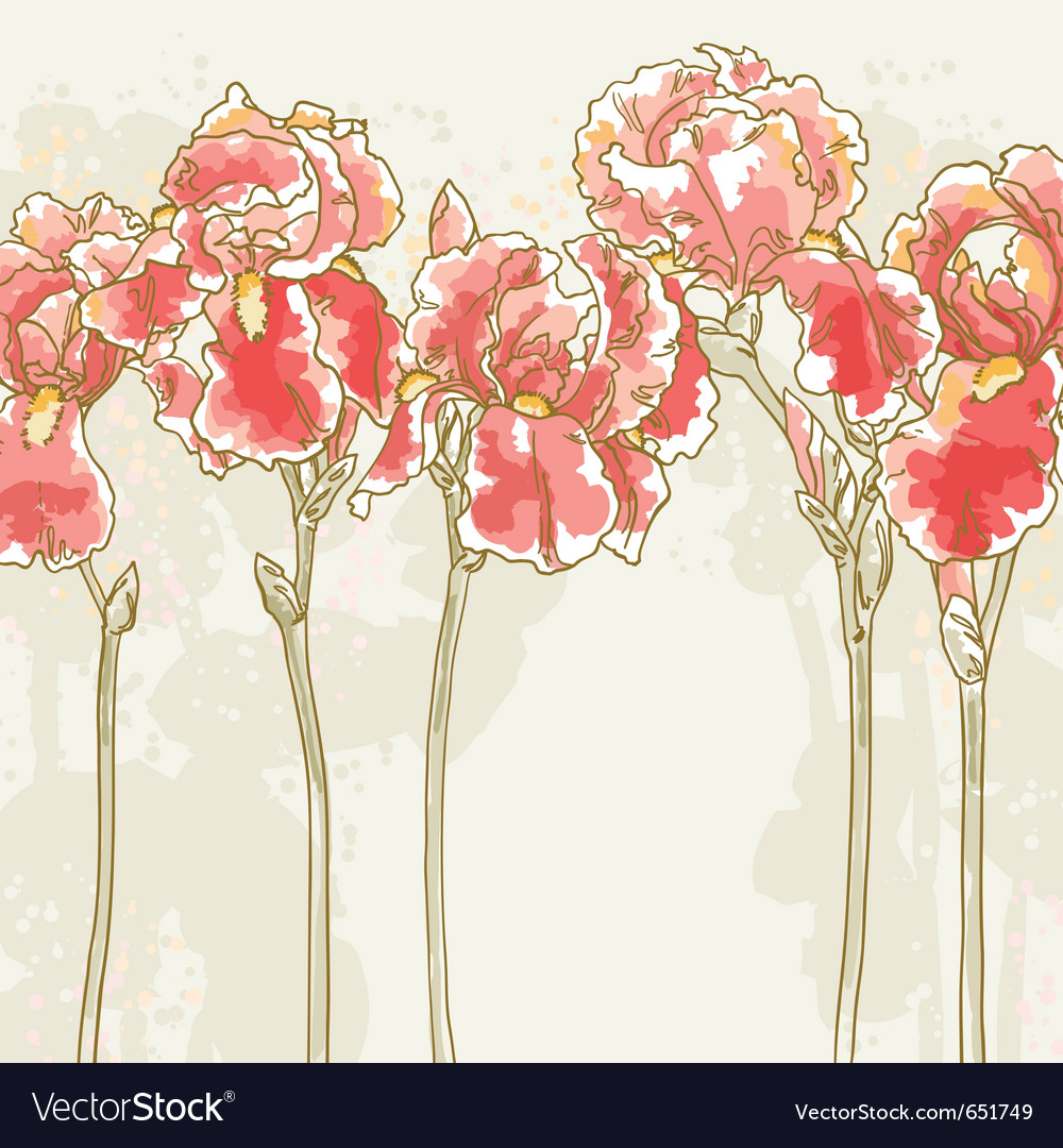 Background with red iris flowers vector