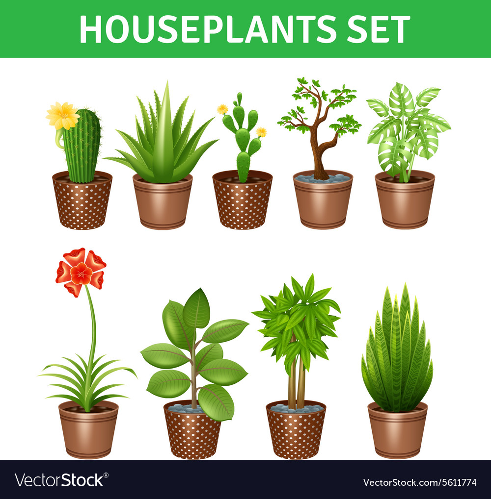 Houseplants realistic icons set vector