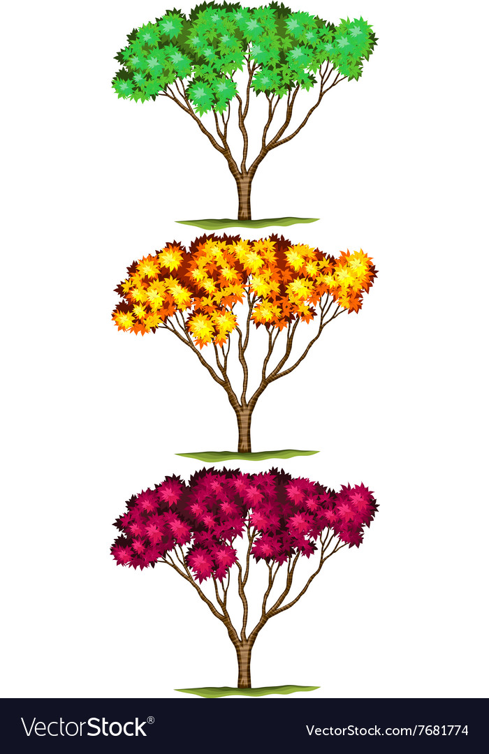 Tree in three different colors vector
