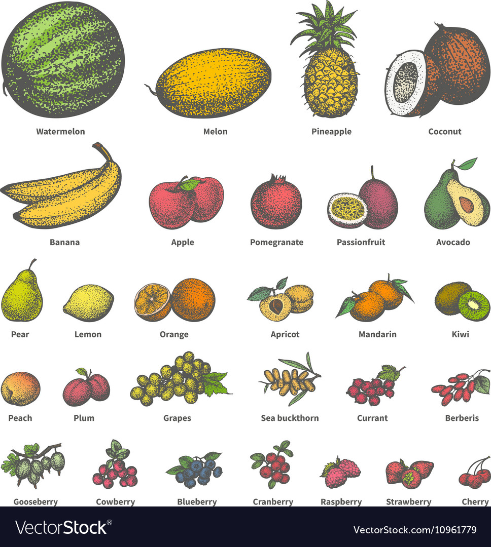 Big set different colored juicy ripe fruit vector